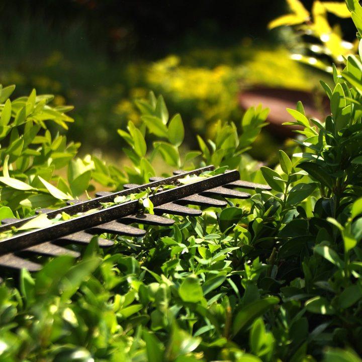 hedge, cut, formschintt